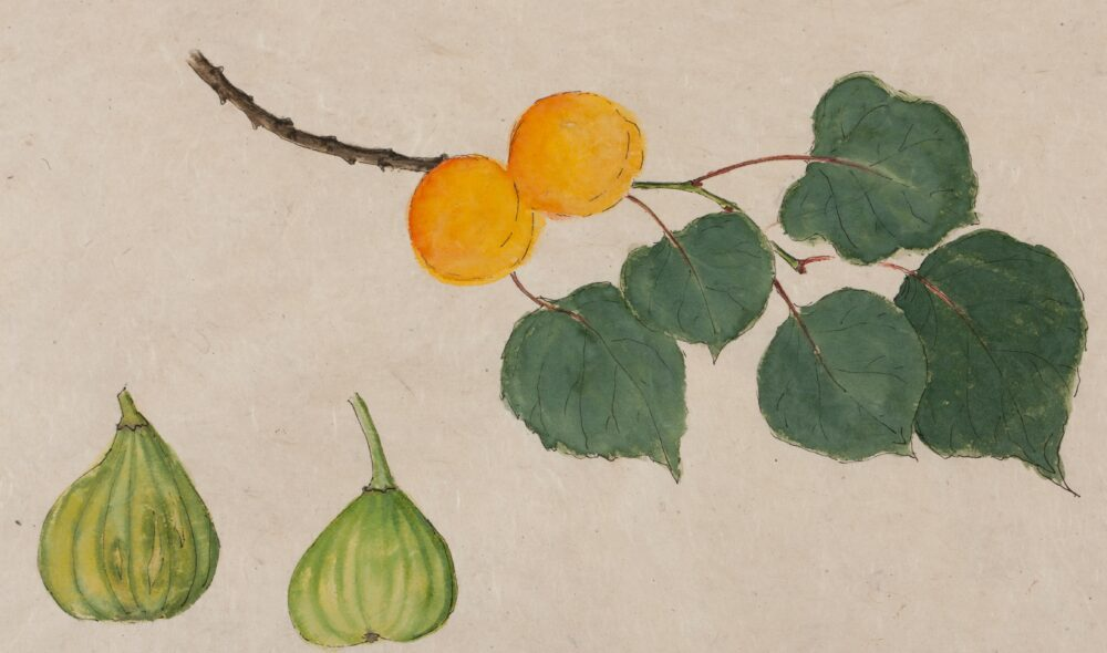 Figs and Apricots by Emma Tennant