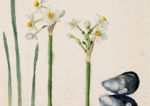 Narcissus – Scilly White and Mussel Shells by Emma Tennant