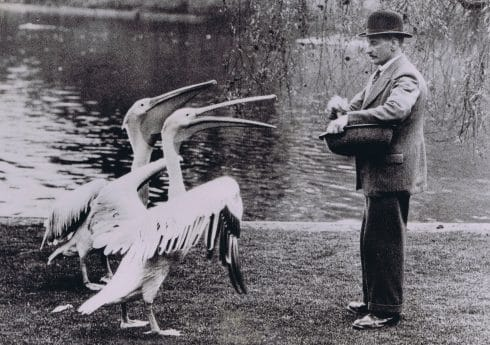 S460 – man feeding pelicans. 1936 Courtesy of The Hearsum Collection