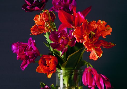 Mixed Tulips by Kevin Dutton